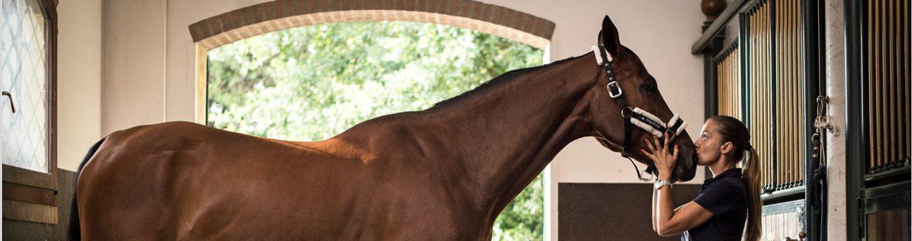 listing-cavallo-capezze